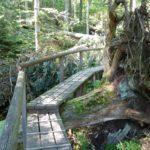 Auf dem Seelensteig die Seele des Waldes besuchen