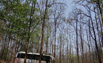 Bus im Wald