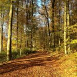 Rothaarsteig – Top Trail of Germany