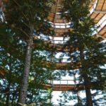 Tierfreigelände und Baumwipfelpfad, Bayerischer Wald