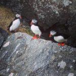 Vogelinsel Runde mit Vogelbeobachtung der Papageitaucher